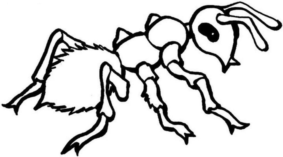 Ant Coloring Pages Kids Preschool Crafts