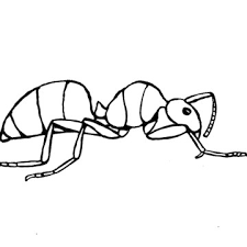 Ant colouring page for preschool