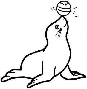Monk seal colouring pages for kids preschool and for Circus seal coloring page