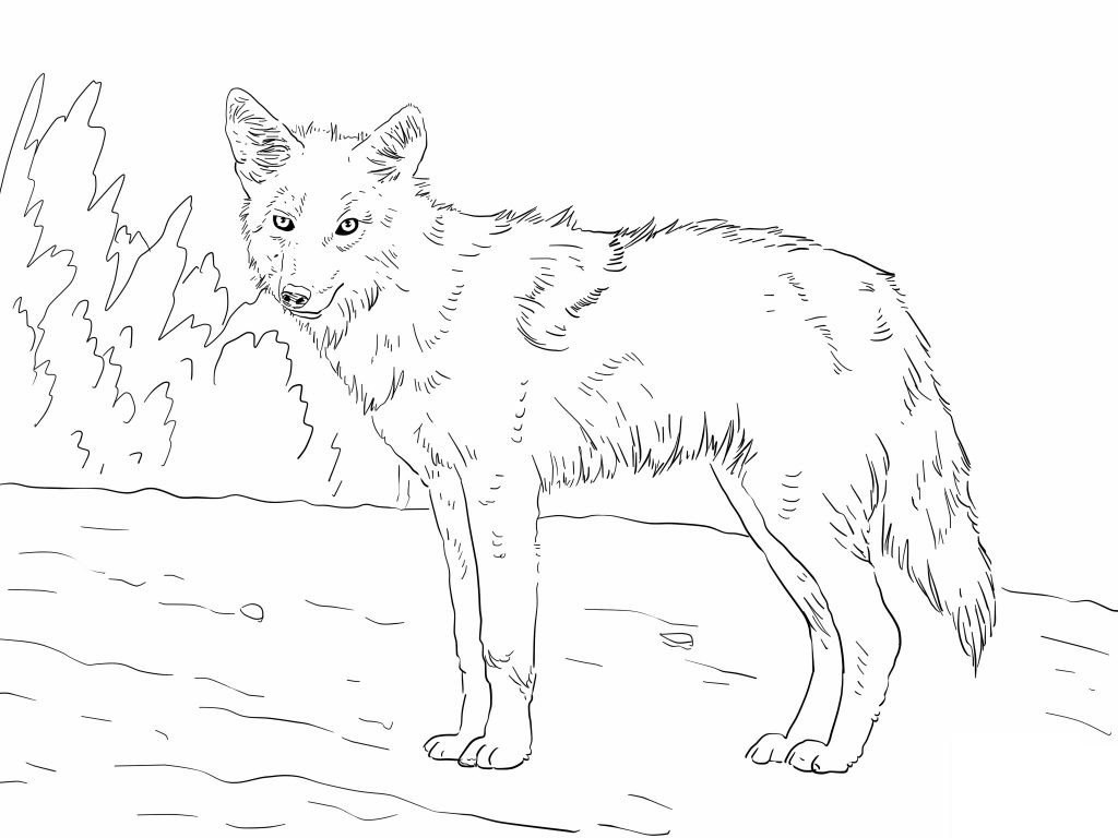 Free-Printable-Coyote-Coloring-Pages