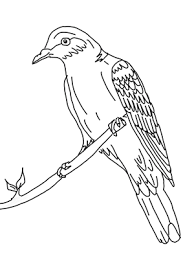 Free printable canary coloring page for preschool