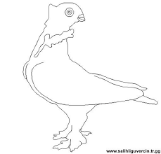 Free printable canary coloring pages for kids