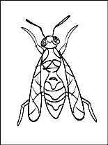 Free printable hornet coloring pages for kids