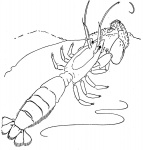 Free printable lobster coloring pages for adult