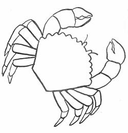 Free printable lobster colouring pages