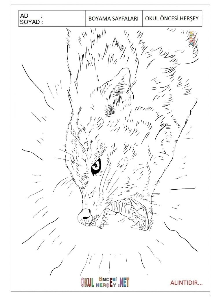 Jackal-coloring-pages-for-preschool