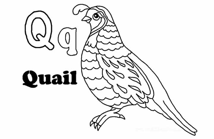 quail outline - photo #40