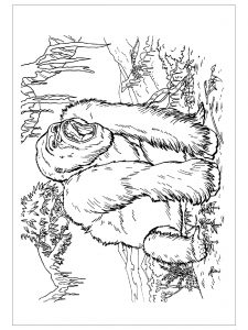 animals-gorilla-printable-colouring-pages-for-preschool