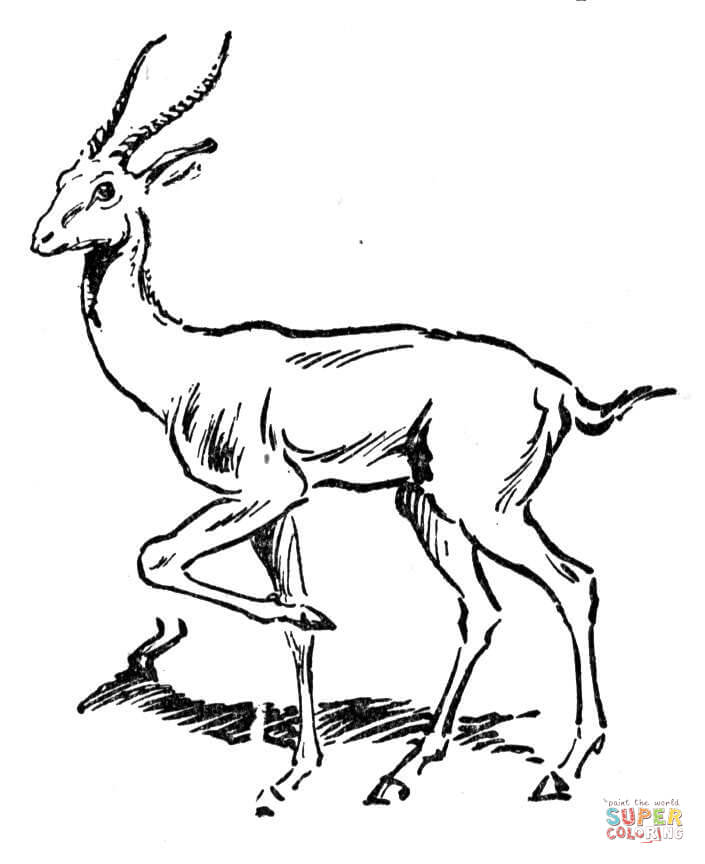 antelopes-coloring-page
