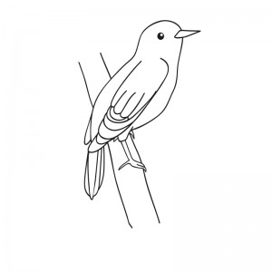bird coloriage
