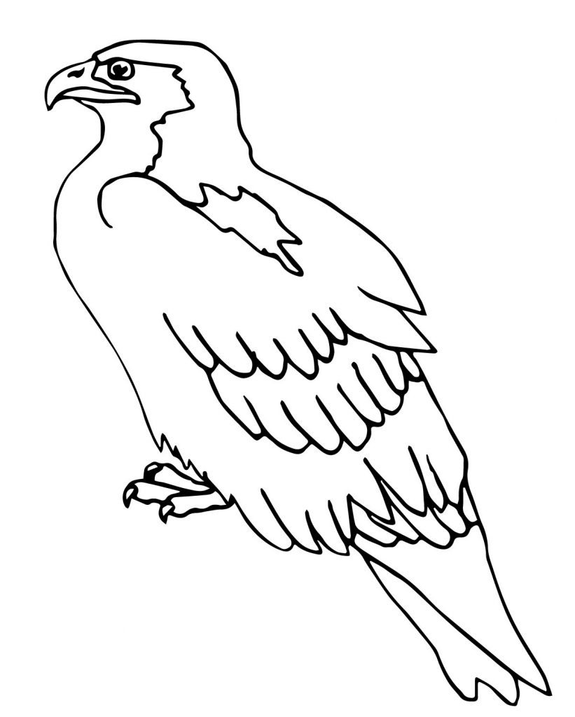 Hawk amp Falcon Coloring Pages for