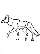 coyote-painting