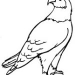 free Eagle coloring pages ideas for preschool