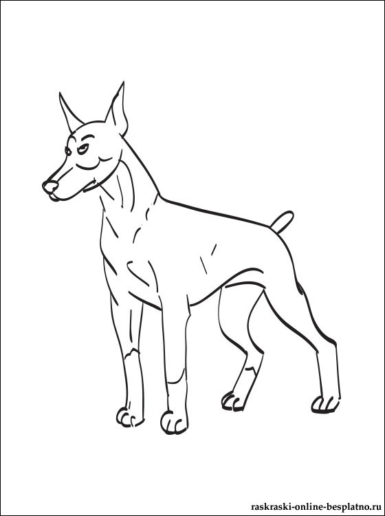 free-animals- Doberman -printable-coloring-pages-for-preschool