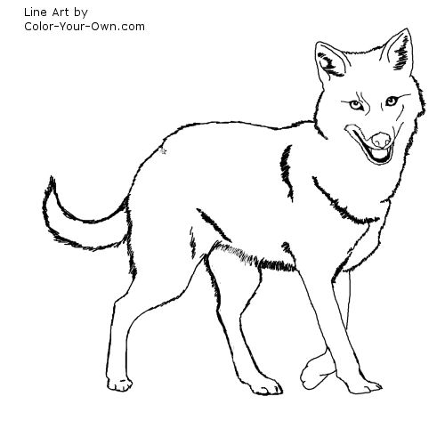 free-animals-Jackal-printable-coloring-for-preschool