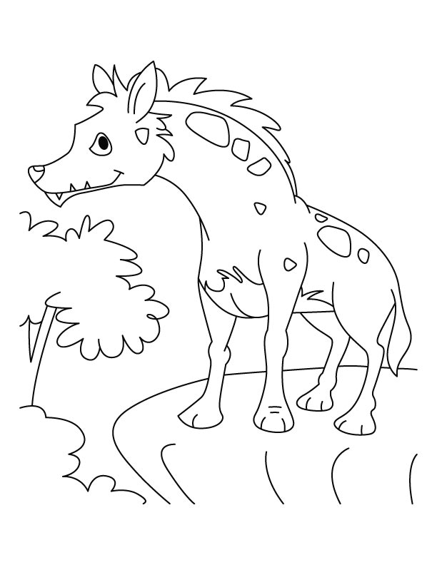 Coyote Jackal Coloring Pages for Kids Preschool and