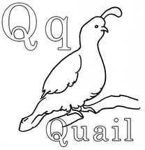 free-animals-Quail-printable-coloring-for-preschool