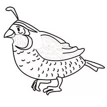 free-animals-Quail-printable-coloring-pages-for-preschool