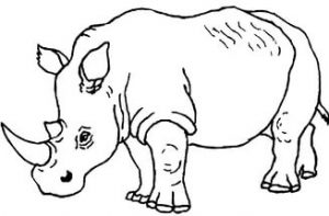 free-animals- Rhino -printable-coloring-pages-for-preschool