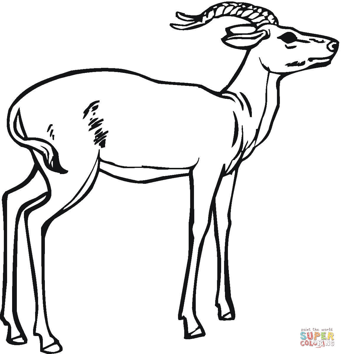 Antelope Coloring Pages Preschool