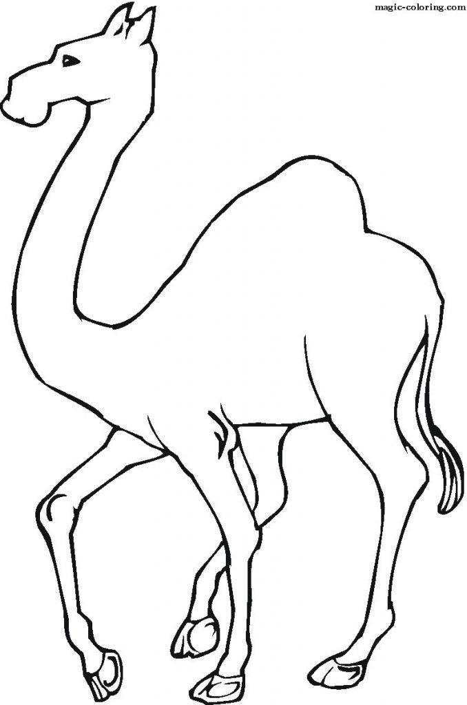 free-animals-camel-printable-coloring-for-preschool