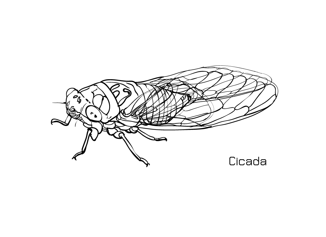 free-animals-cicada-printable-colouring-pages-for-preschool