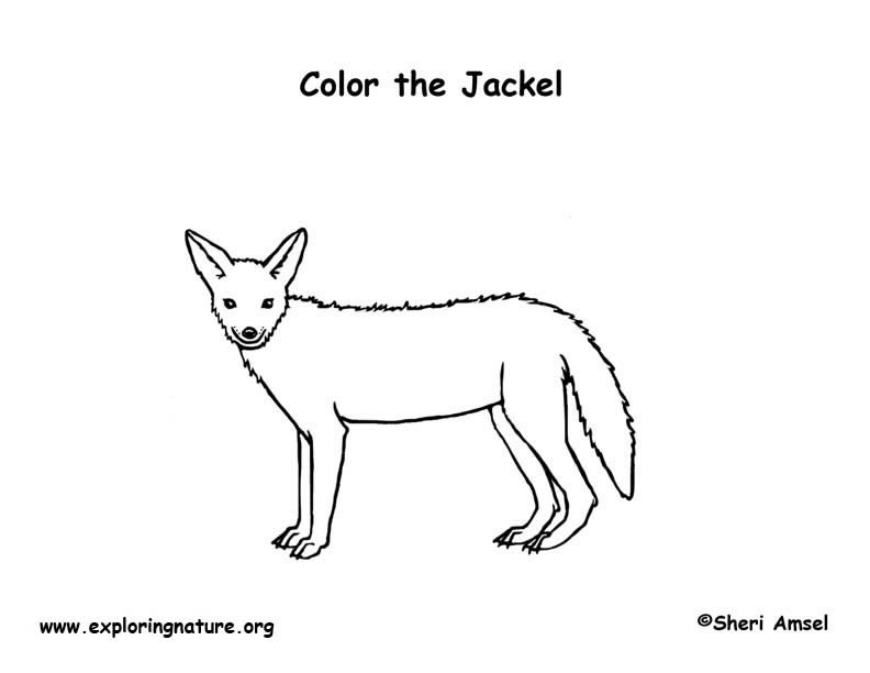 ... Free Animals Coyote Printable Coloring Pages For Preschool ...