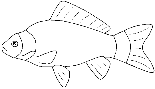 free animals fish printable pages for preschool - Coloring Page Of Fish
