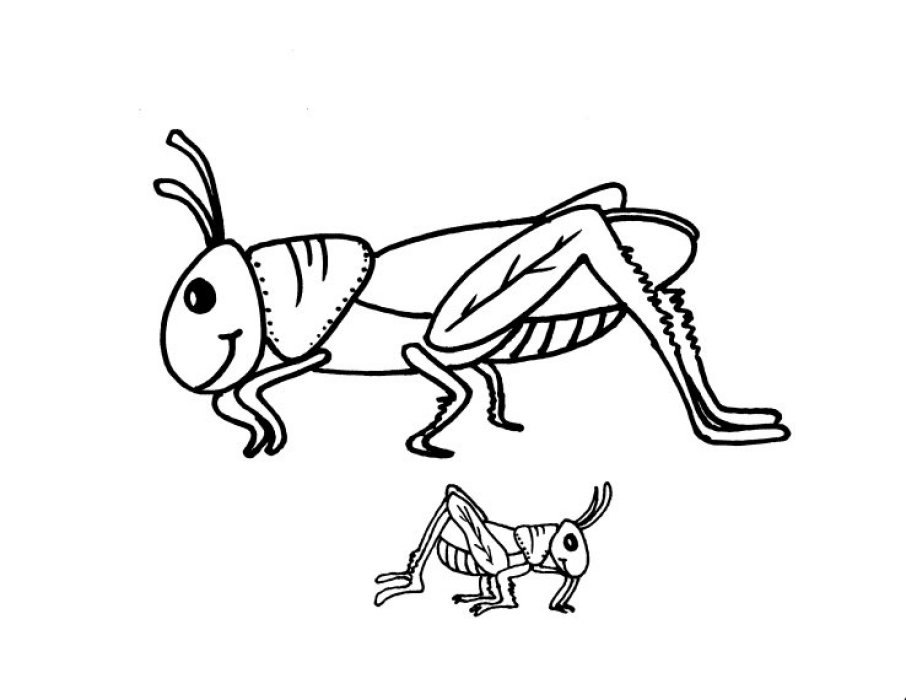 Preschool Grasshopper Coloring Pages