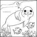 free-animals-monk seal-coloring-pages-for-preschool