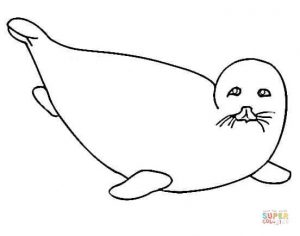 free-animals-monk seal-printable-colouring-for-preschool