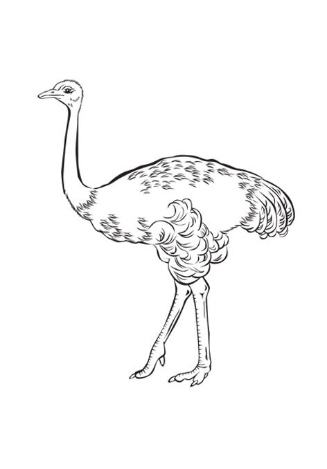 free-animals-ostrich-printable-coloring-pages-for-adult