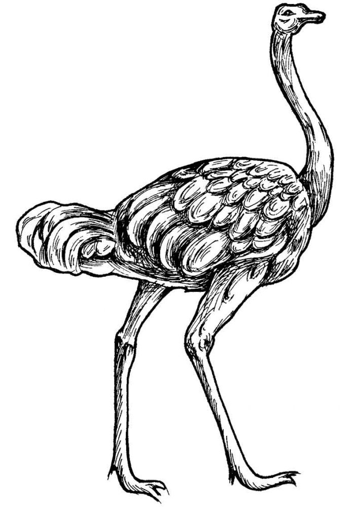 Ostrich Coloring Pages for Kids