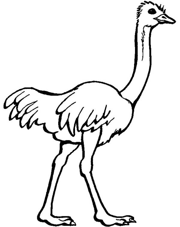 free-animals-ostrich-printable coloring-pages-for-preschool