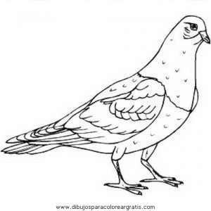... Free Animals Pigeon Printable Colouring Pages For Preschool ...