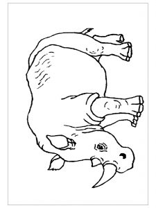 free-animals-rhino-printable-coloring-pages-for