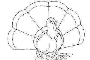 free-animals-turkey-printable-coloring-pages-for-child