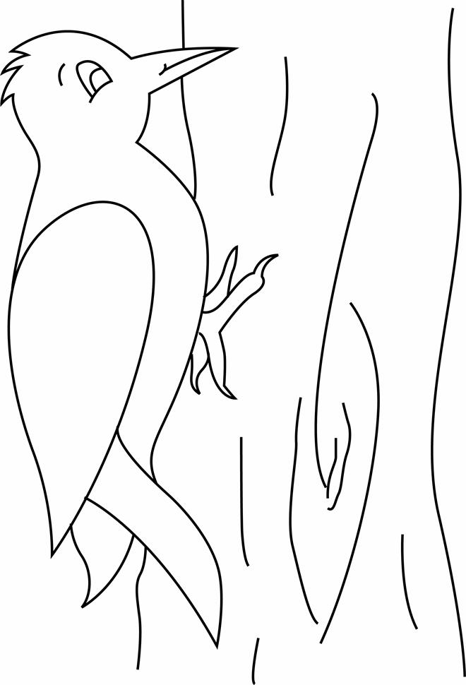 Woodpecker coloring pages preschool and kindergarten for Coloring page for preschool