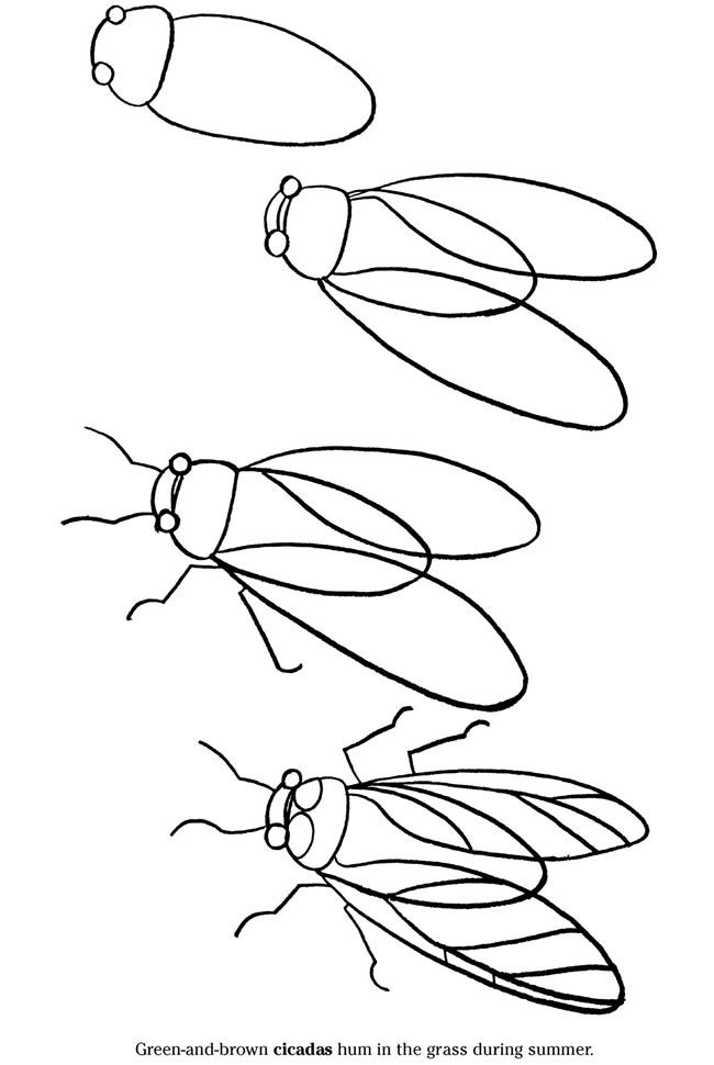 free-cicada-printable-coloring-pages-for-preschool