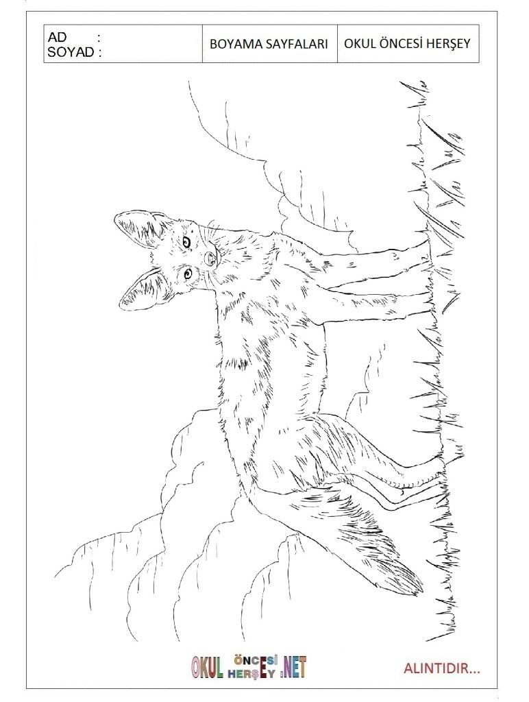 free-coyote-printable-coloring-pages-for-preschool
