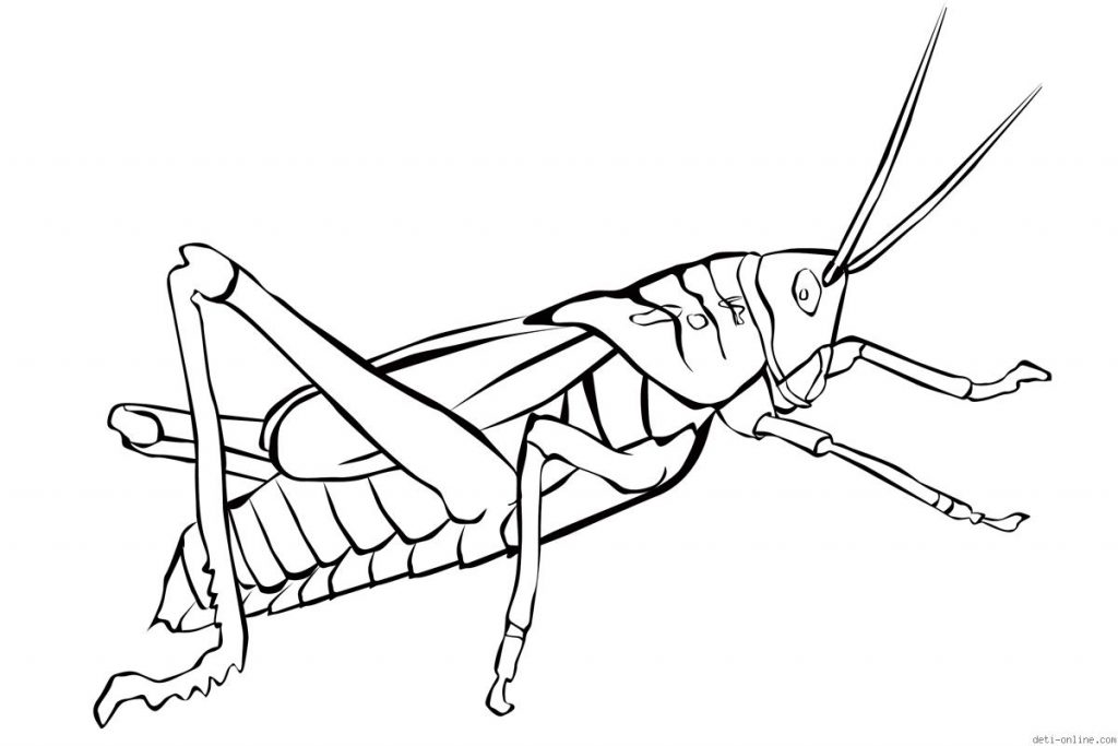 free-grasshopper-printable-coloring-pages-for
