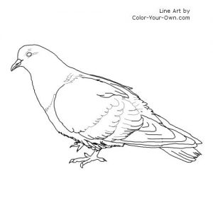 free-pigeon-printable-colouring-pages-for-preschool