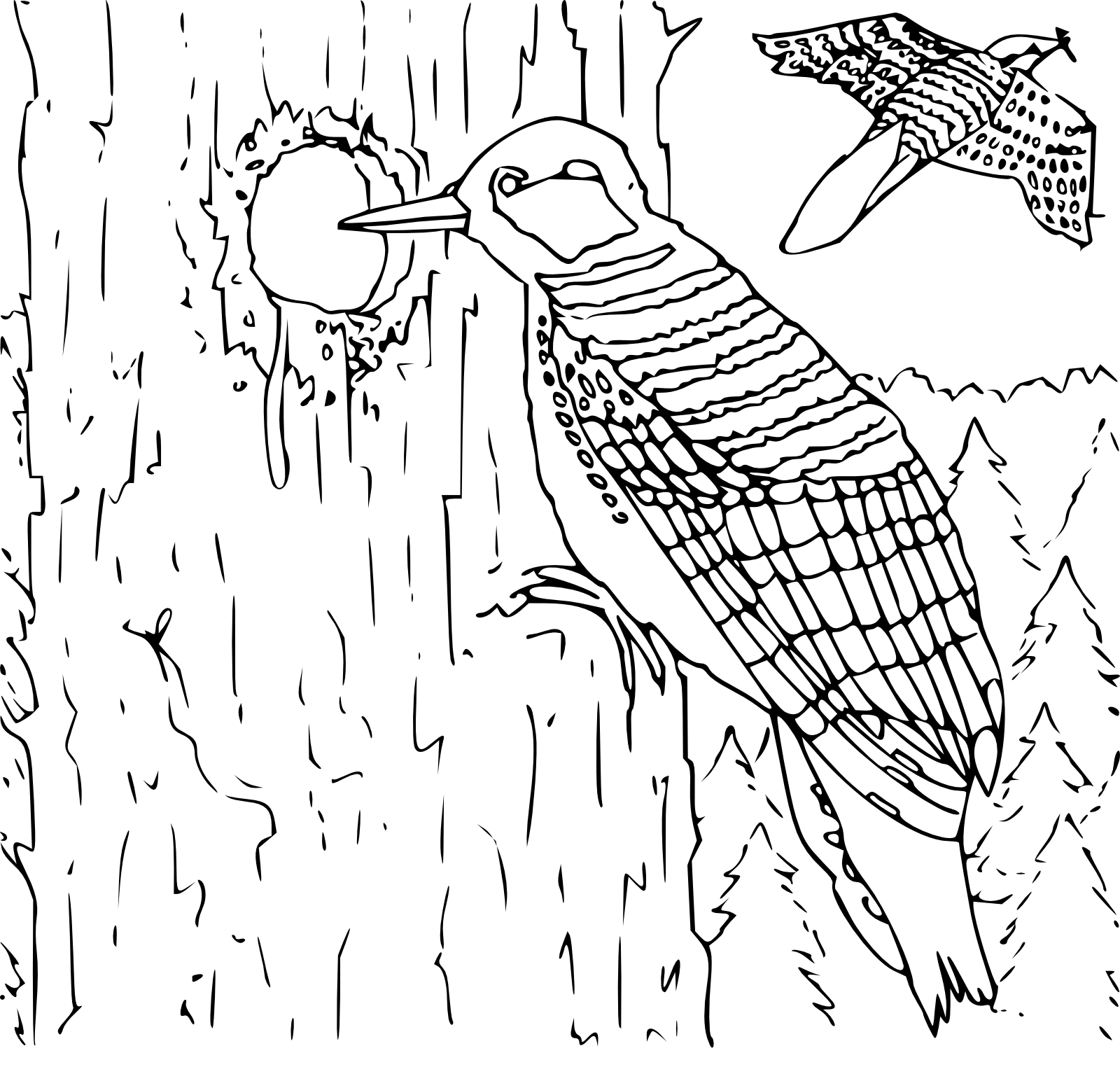 woodpecker coloring pages preschool and kindergarten