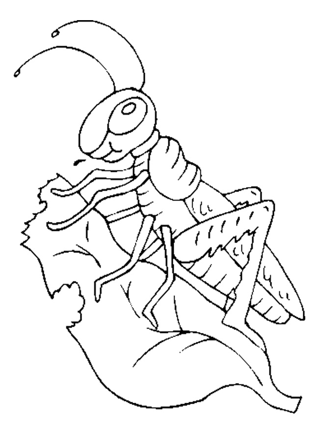 coloring page websites - grasshopper coloring pages for kids preschool and