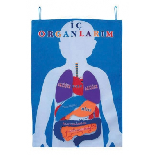 Human Body Bulletin Board For Preschool on Clothes Worksheet For Kids