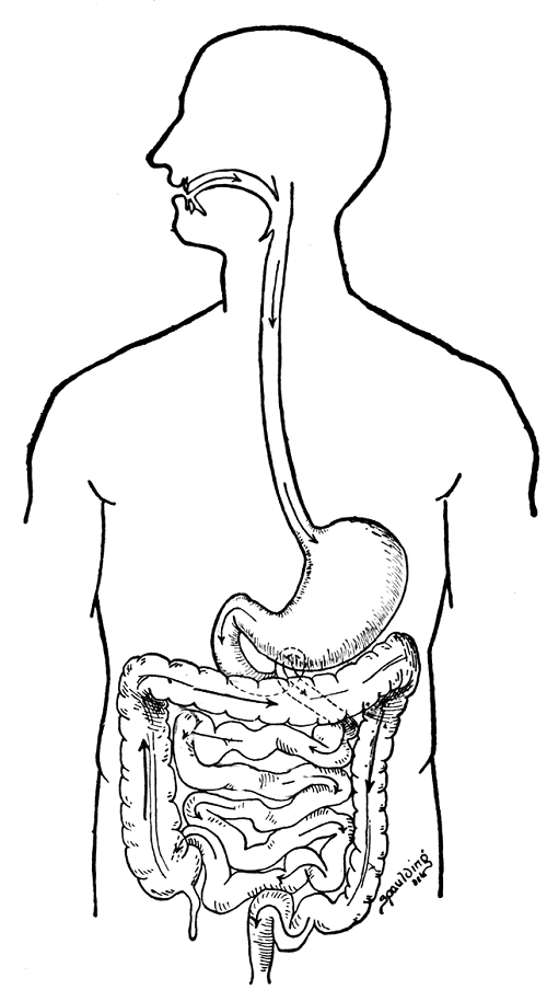 human organ systems coloring pages - photo#16