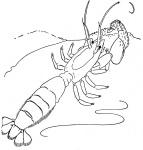 le-petite-crevette-marche-dans-le-fond-coloriage