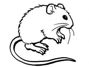 mouse-coloring-pages