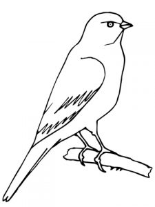 perched-canary-coloring-page