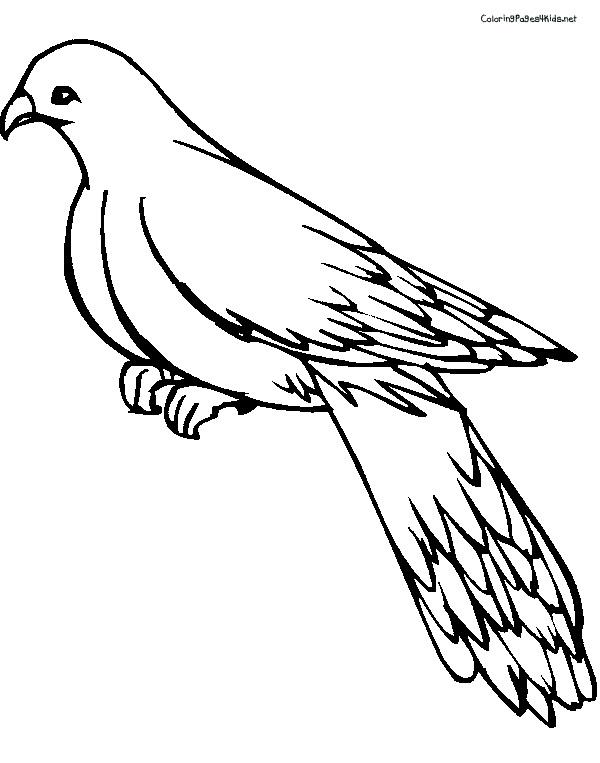 pigeon painting Preschool Crafts